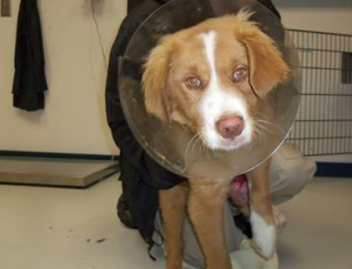 Animal Control Rescues Injured Puppy