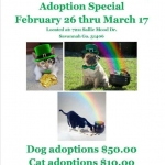 St. Pat's Adoption Special