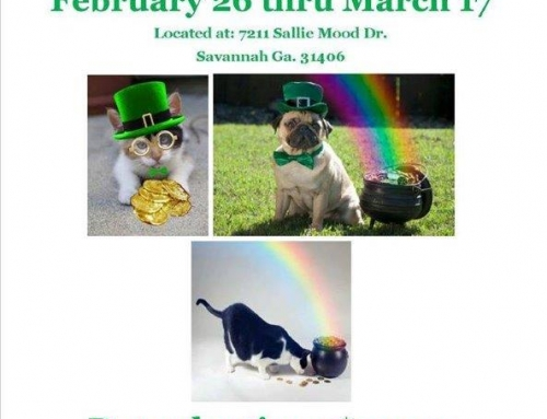 Animal Control Offers St. Pat's Pet Adoption Specials