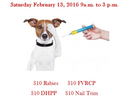 Animal Control Hosts Winter Vaccination Clinic